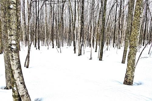 Snowy Woods - Lehtiniemi